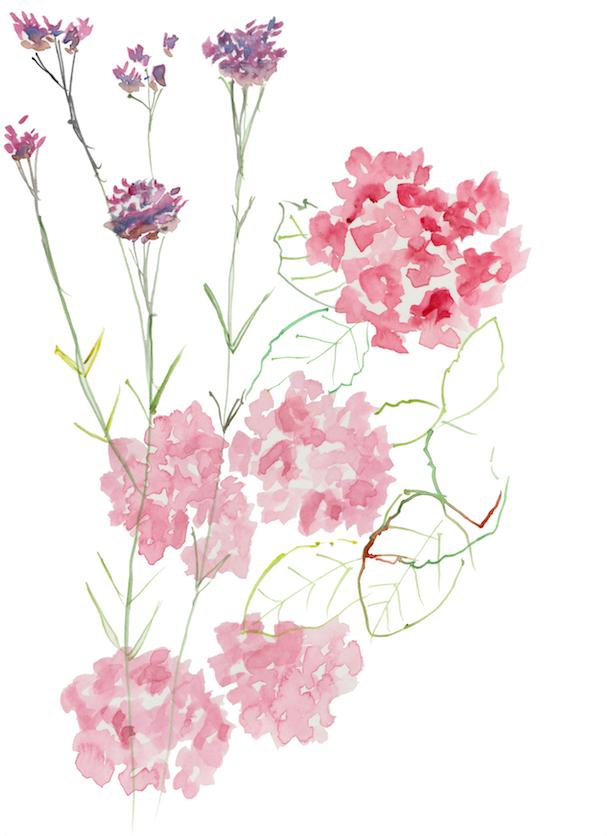 Hydrangea and verbena
